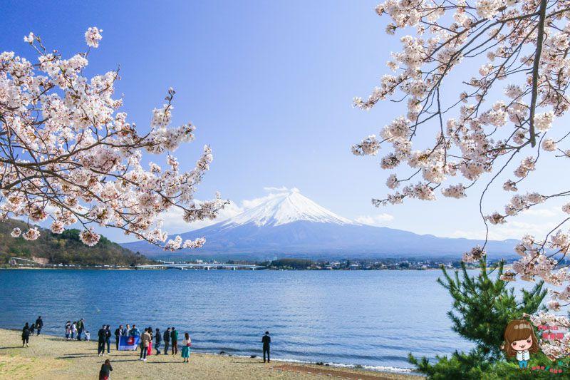 富士山賞櫻