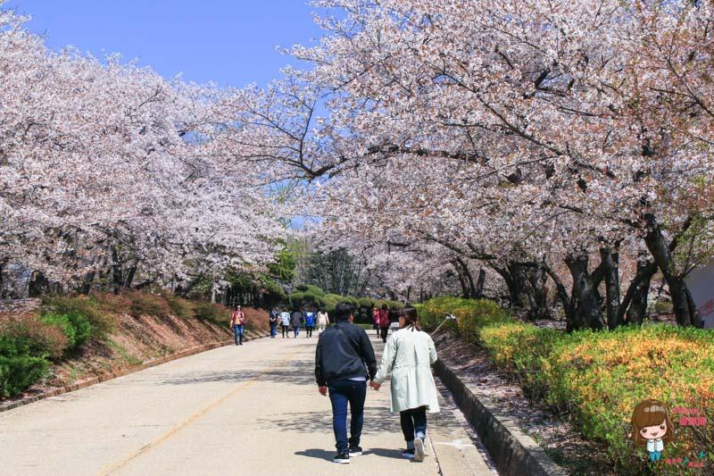韓國賞櫻景點
