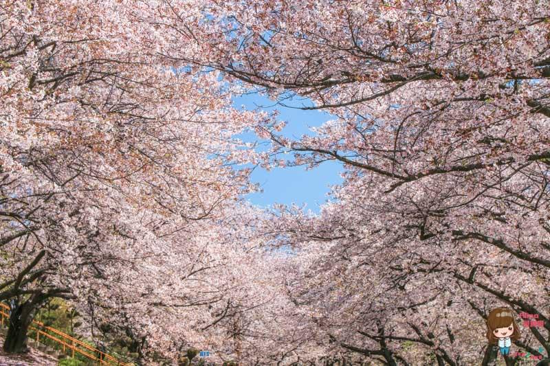 韓國首爾賞櫻景點