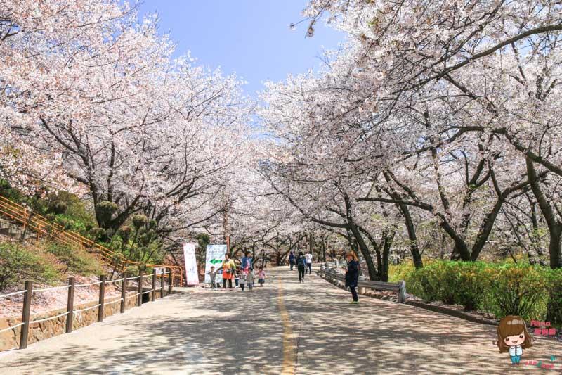 SK石油化學櫻花公園