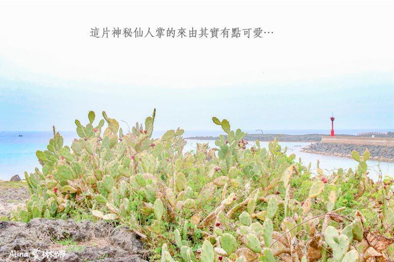 濟州島仙人掌